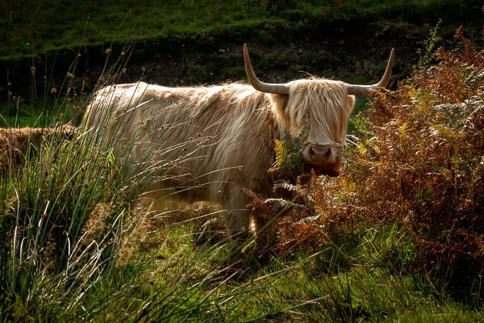 Isle of Skye - Highland Rind