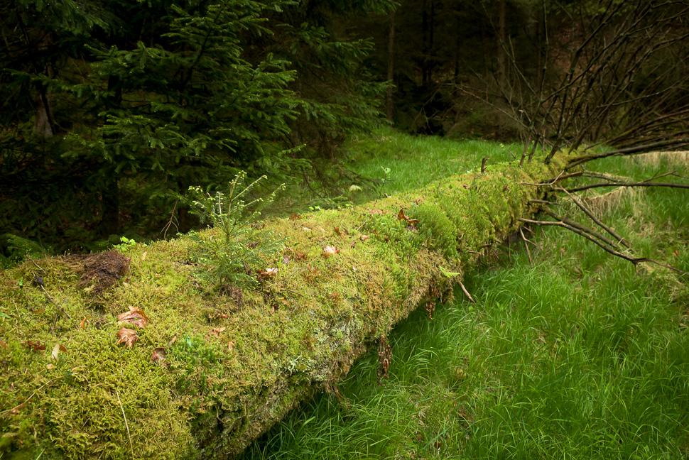im Wald fotografiert mit Olympus MFT oder Nikon Vollformat?