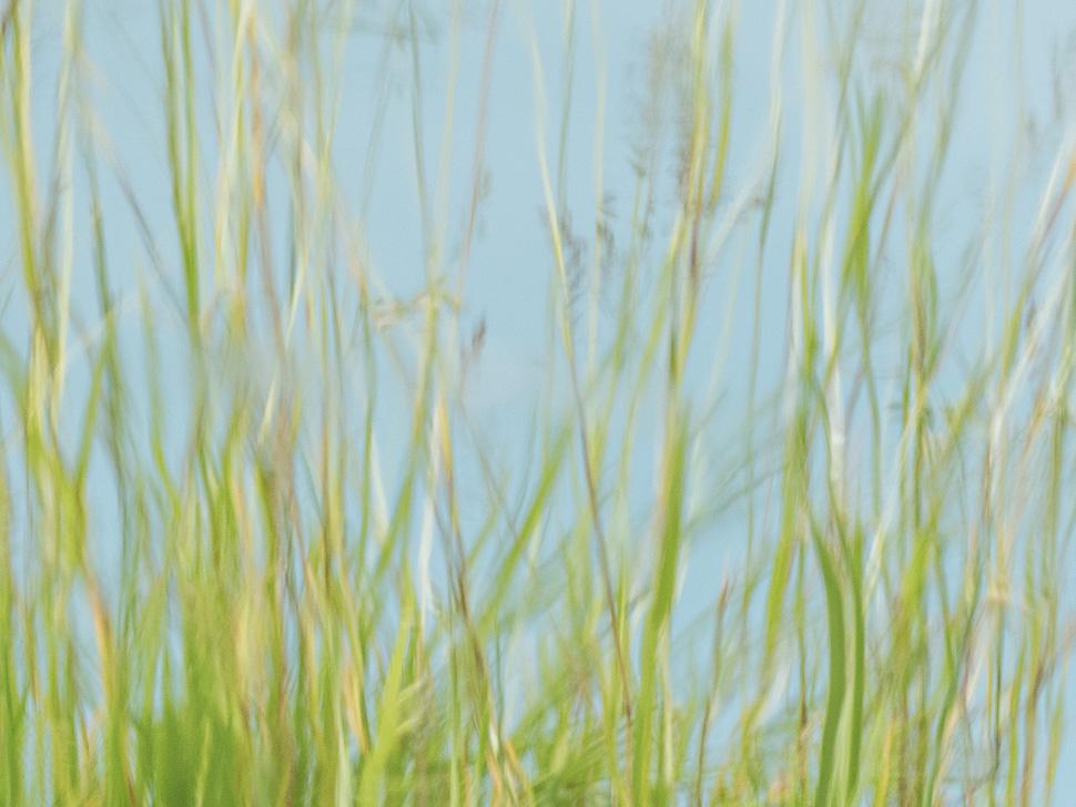 Gräser spiegeln sich im Wasser