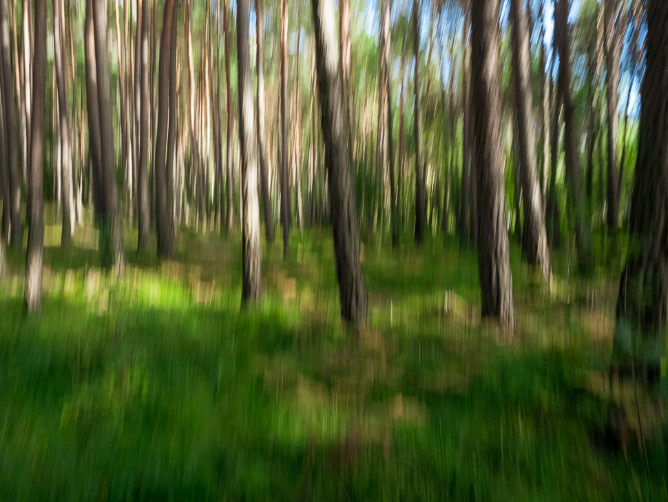 Wald fotografiert mit absichtlicher Kamerabewegung