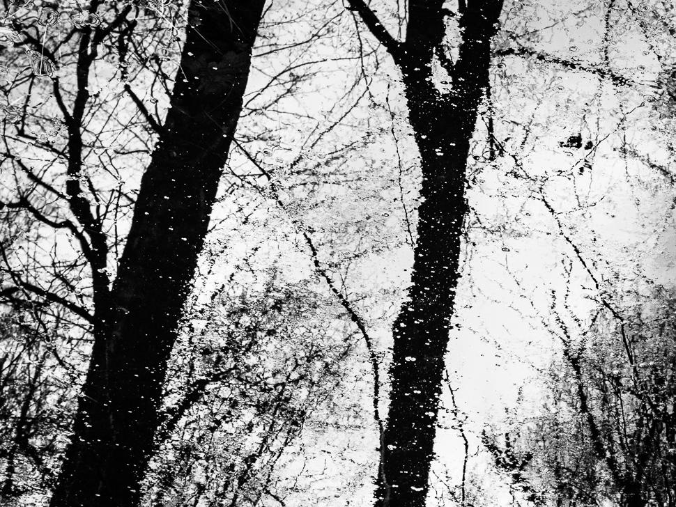 Spiegelung winterlicher Bäume im Wasser
