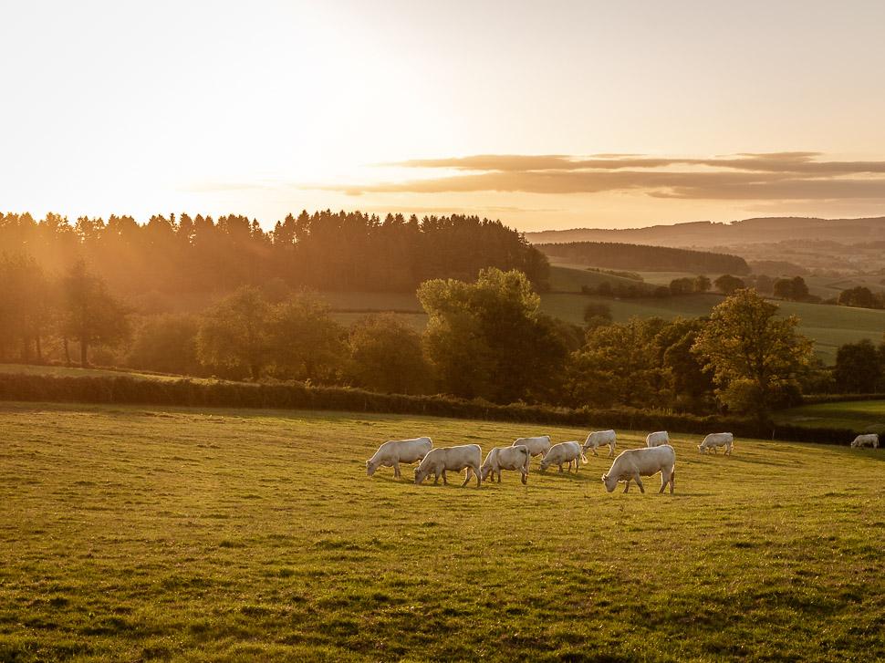 Abendsonne über Landschaft in Burgund