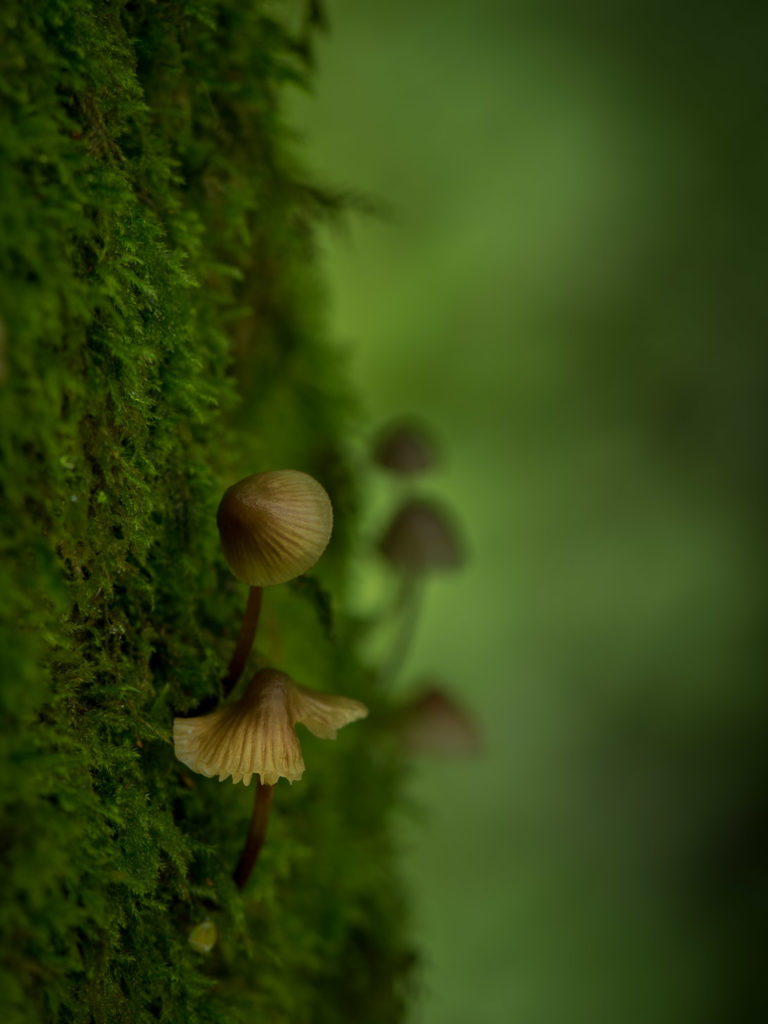 kleine Pilze am Baumstamm wachsend