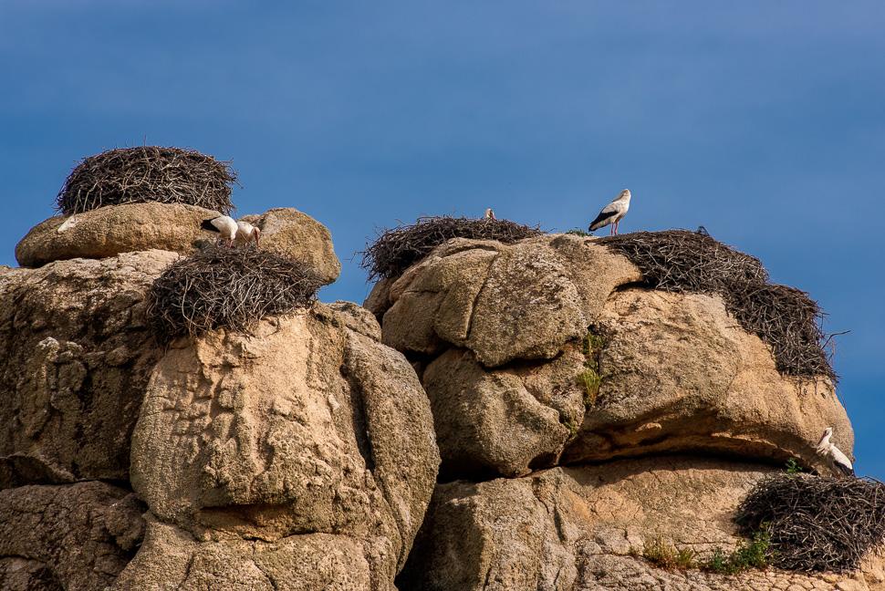 Storchennester auf Granitfelsen von Los Barruecos