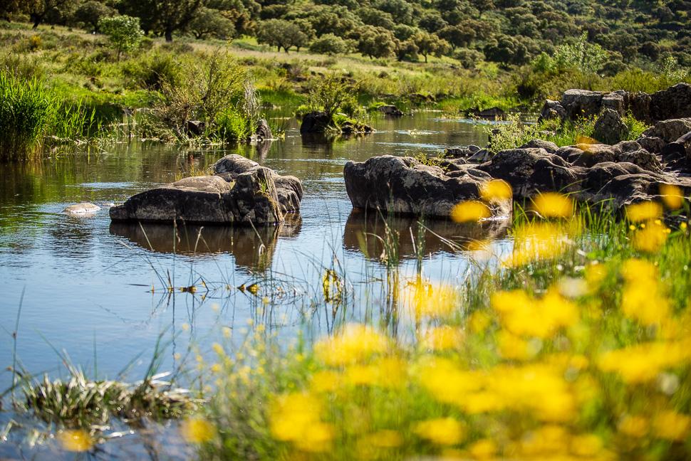 am Unterlauf des Rio Almonte