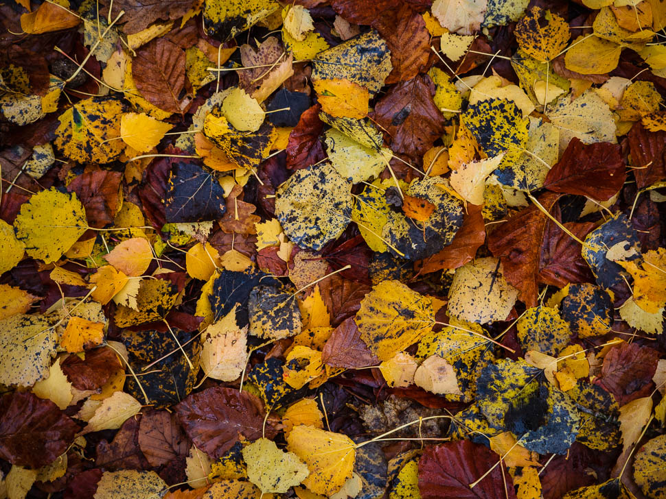buntes Herbstlaub am Boden