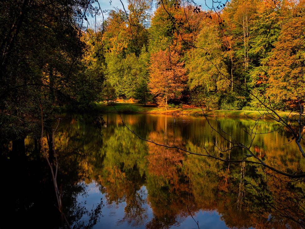 bunt verfärbte Bäume am See