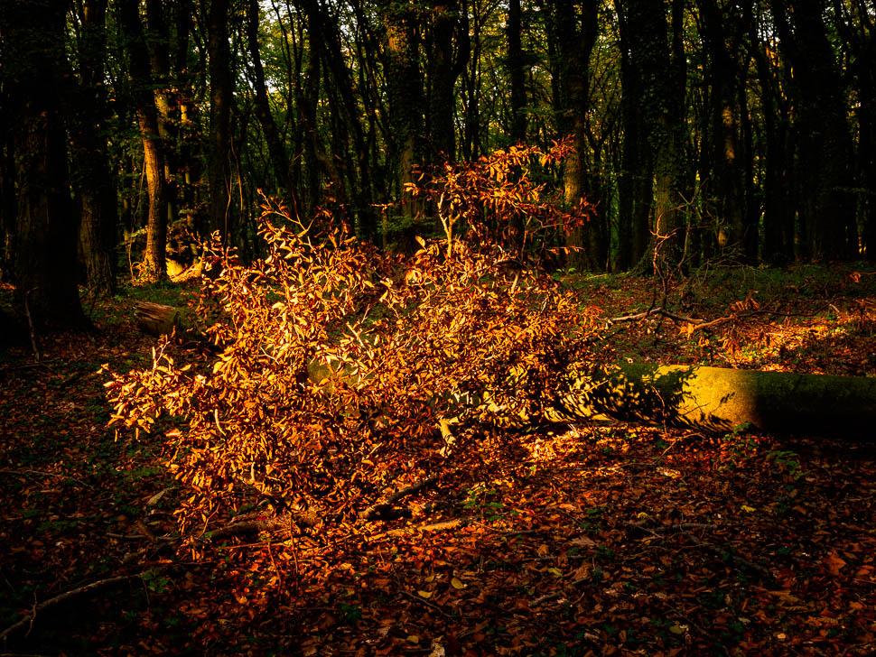 Herbstlaub im Sonnenfleck