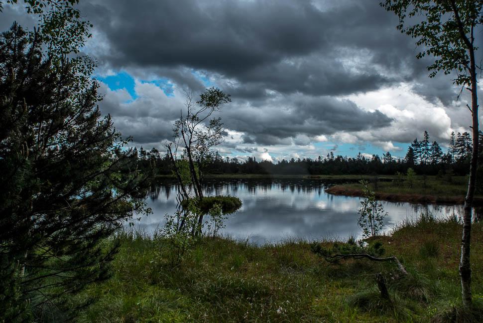 Wildseemoor