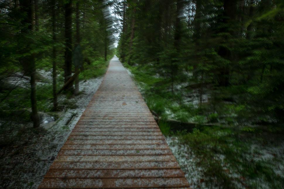 Weg zum Wildseemoor bei Hagel