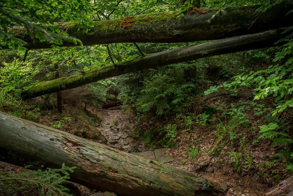 Wildnispfad bei Plättig